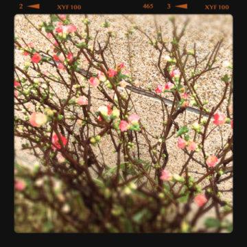 むむむっ???   春っ???(^_-)