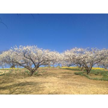 梅の花♡〜代官山の美容院BEKKUのブログ〜