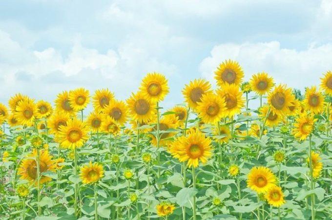 お悩み解決ブログ〜『紫外線』その④〜代官山の美容院BEKKUのブログ