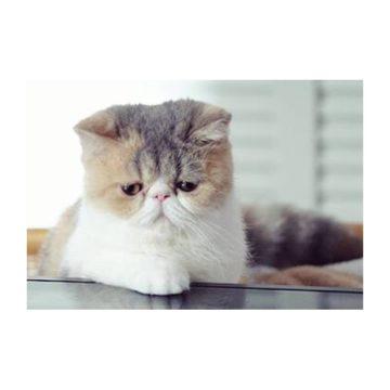 シリーズブログ〜飼いたいペット〜SHOKOver〜代官山の美容院BEKKUのブログ〜