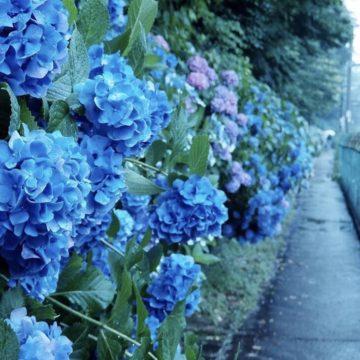 夏にしたいこと~代官山の美容院BEKKUのブログ~