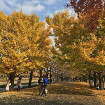 秋になってきて行ってみたい所〜恵比寿の美容院BEKKUのブログ〜