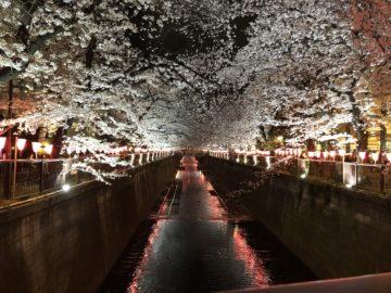 春の楽しみ〜恵比寿、広尾の美容院BEKKUのブログ〜