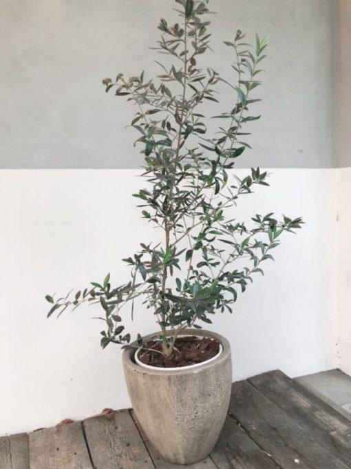 BEKKU hair salon広尾店の植物達をご紹介
